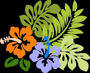 hibiscus-opuesto-hi